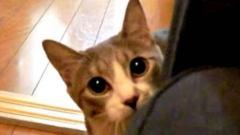 ご主人様と「だるまさんが転んだ」で遊ぶ猫ちゃんがとってもかわいい☆
