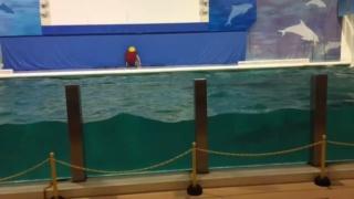 ショーの前に技の確認!?水族館のイルカ達のプロ根性が見える映像が話題!